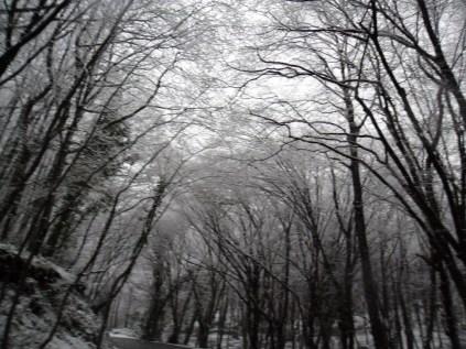 Belgrade-Forest-under-snow-January-2012-28