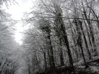 Belgrade-Forest-under-snow-January-2012-29