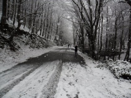 Belgrade-Forest-under-snow-January-2012-31