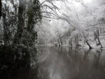 Belgrade-Forest-under-snow-January-2012-34