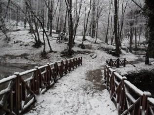 Belgrade-Forest-under-snow-January-2012-41