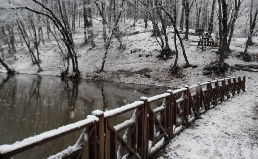 Belgrade Forest, under snow