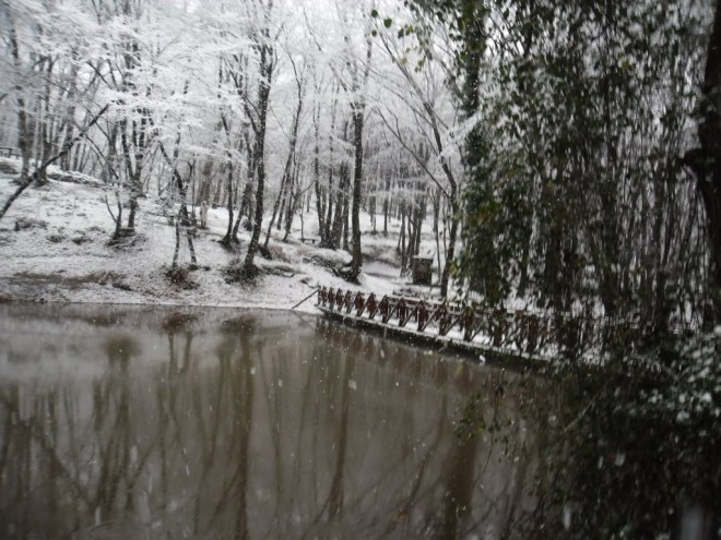 Belgrade Forest, under snow. January 2012 (45)