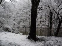 Belgrade-Forest-under-snow-January-2012-46