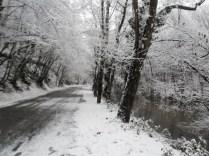 Belgrade-Forest-under-snow-January-2012-48
