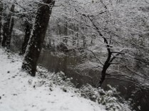 Belgrade-Forest-under-snow-January-2012-49