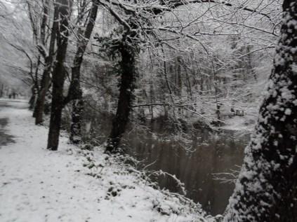 Belgrade-Forest-under-snow-January-2012-50