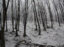 Belgrade-Forest-under-snow-January-2012-55