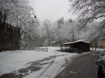Belgrade-Forest-under-snow-January-2012-58