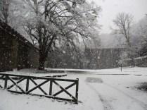 Belgrade-Forest-under-snow-January-2012-59