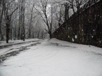 Belgrade-Forest-under-snow-January-2012-61