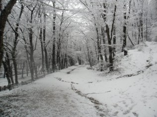 Belgrade-Forest-under-snow-January-2012-64