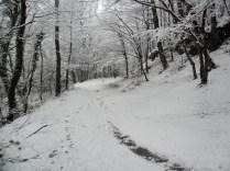 Belgrade-Forest-under-snow-January-2012-66