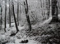 Belgrade-Forest-under-snow-January-2012-67