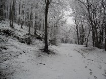 Belgrade-Forest-under-snow-January-2012-68