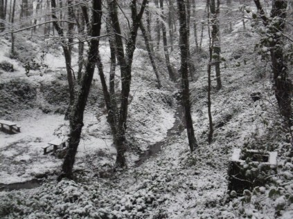 Belgrade-Forest-under-snow-January-2012-73