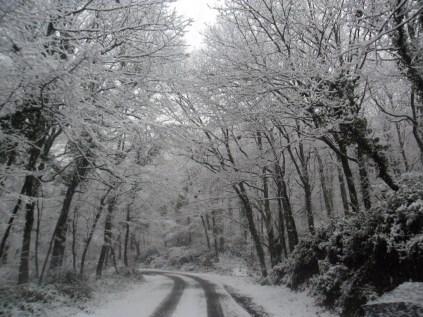 Belgrade-Forest-under-snow-January-2012-76