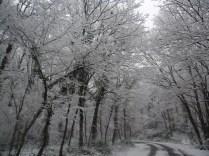 Belgrade-Forest-under-snow-January-2012-77