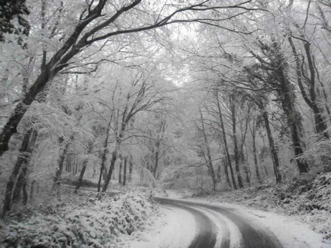 Belgrade Forest under snow, January 2012