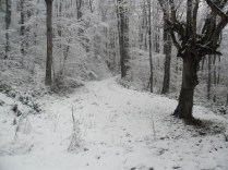 Belgrade-Forest-under-snow-January-2012-82