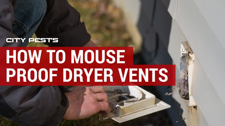 how to mouse proof dryer vents stop
