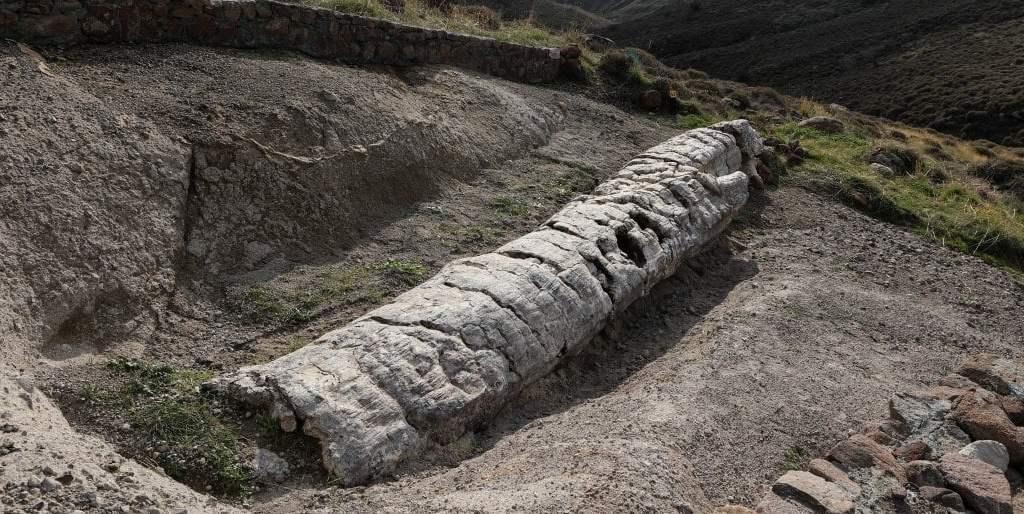 """grecia-dalla-foresta-pietrificata-di-lesbo-affiora-albero-di-20-milioni-di-anni-fa-intatto.-""""mai-visto-uno-cosi,-ci-svelera-l'isola-che-fu"""""""