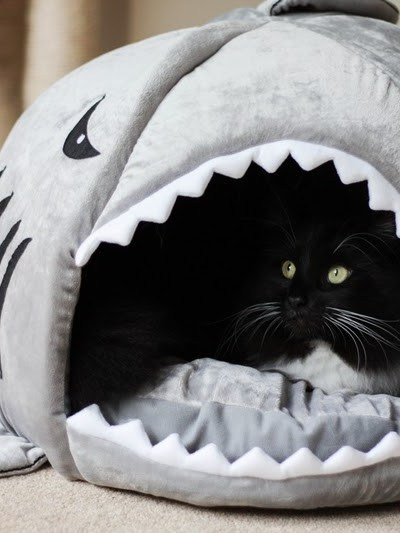 Cookie & his new shark bed