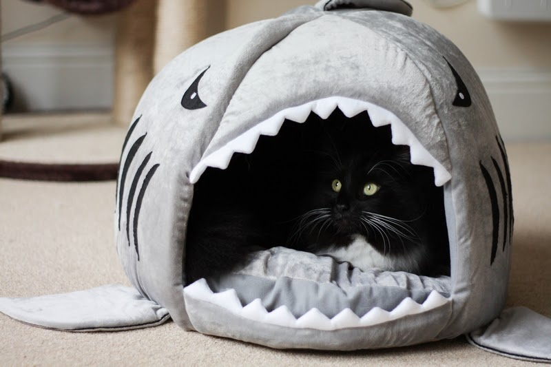 Cat shark bed