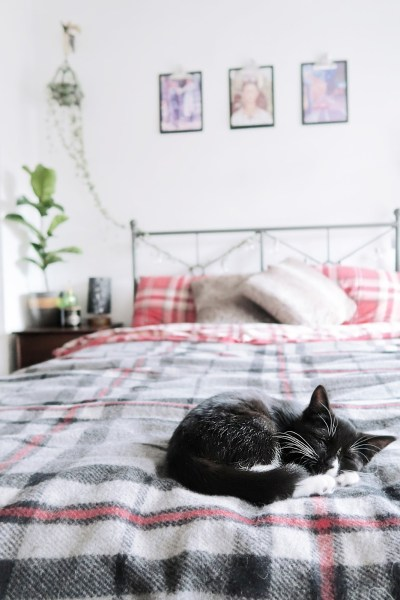 HYGGE for your cat🦁 (+20 cat toys & beds!)​