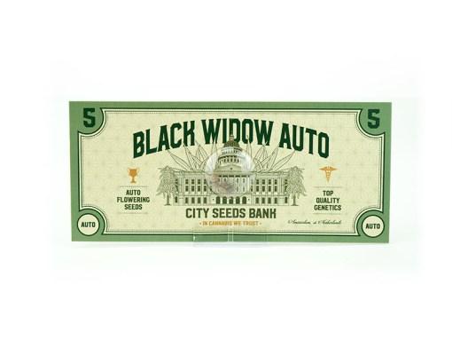 Black Widow Auto