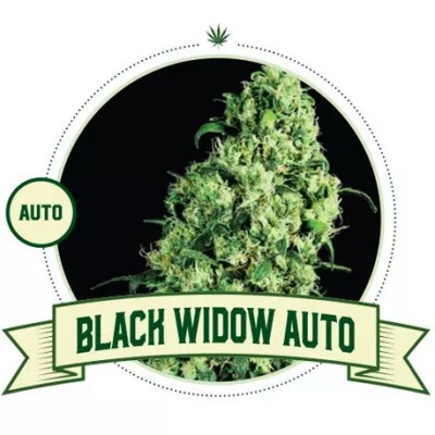 Black Widow Auto