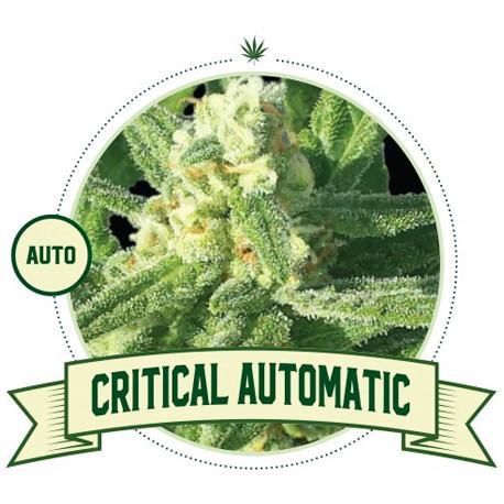 Critical Auto