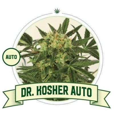 DR Kosher Auto