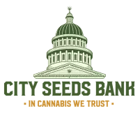 City Seeds Bank