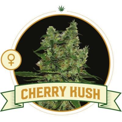 Cherry Kush