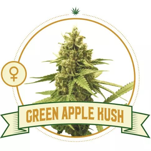 Green Apple Kush