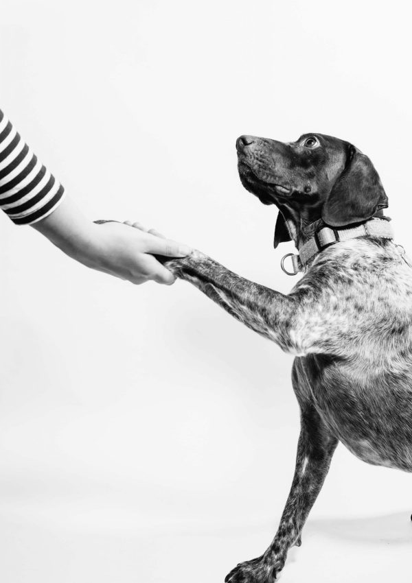 FOUR WAYS TO IMPROVE YOUR RELATIONSHIP WITH YOUR DOG!