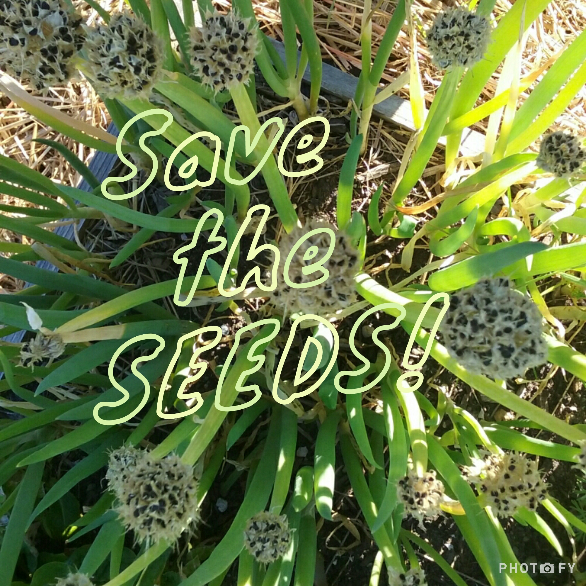 The Importance of Seed Saving