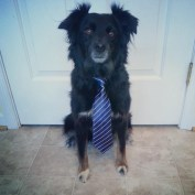 All Business
