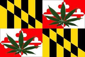 maryland_marijuana_large