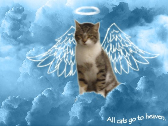 all_cats_go_to_heaven_by_raikea-d25gwc0