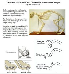declawed vs normal cats observable anatomical changes [ 1012 x 1024 Pixel ]