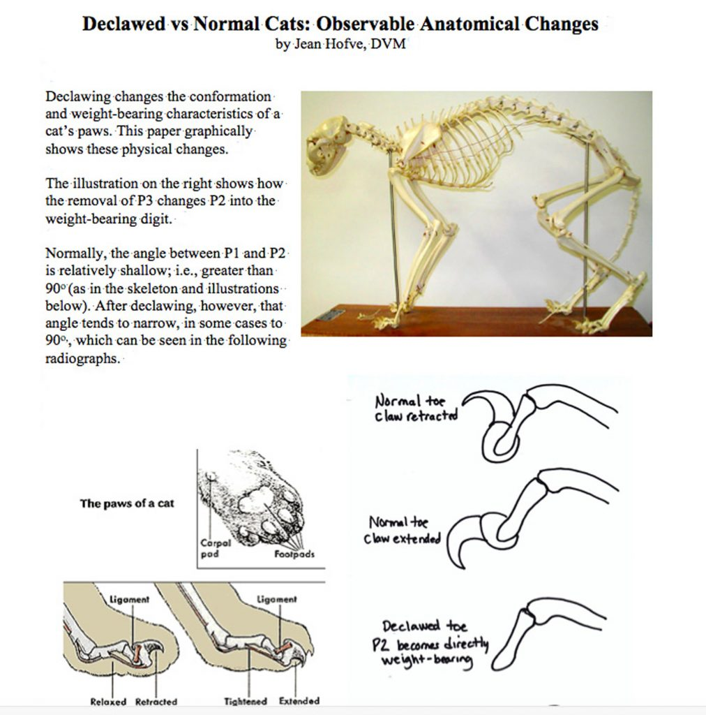 hight resolution of declawed vs normal cats observable anatomical changes