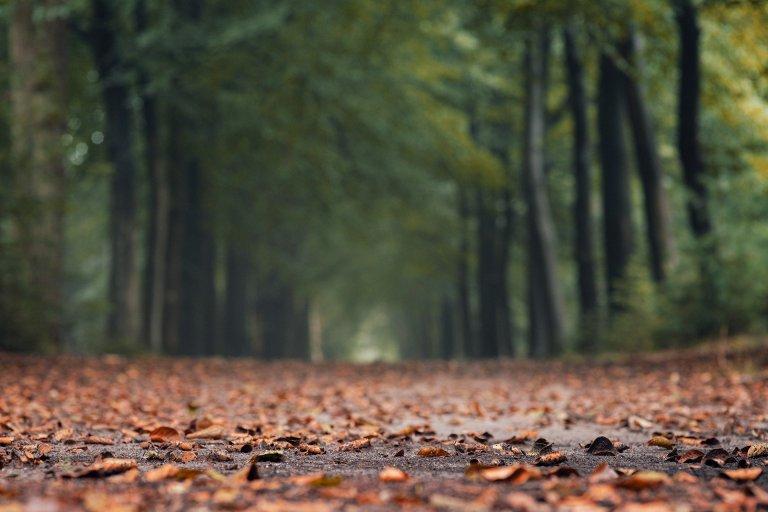 autumn-5511935_1920-min