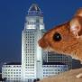 La S Rats The Animals Not The Politicians