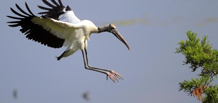 Humedales urbanos podrían ayudar en la reproducción de aves migratorias