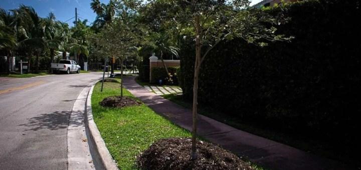 Miami cambiará sus emblemáticas palmeras por árboles de sombra