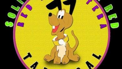 Photo of Cachorros para adopcion responsable