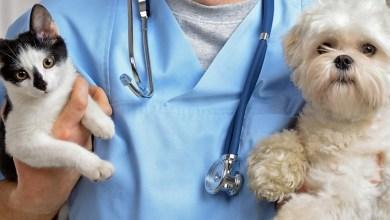 Photo of #Tartagal Las veterinarias están habilitadas para la atención al público