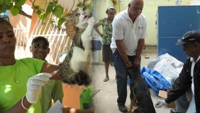 Photo of MSiniciaJornada Nacional de Vacunación de perros y gatos